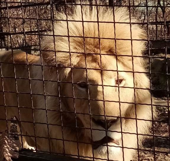 zoo bor